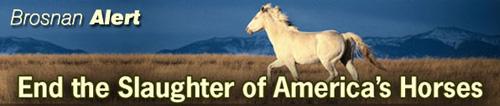 horse-alert.jpg