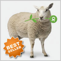 Oxfam Sheep