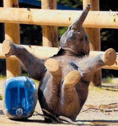 elephant-fun.jpg