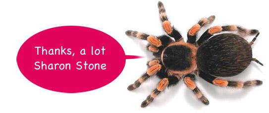 spider peta