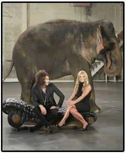 elephants_brit