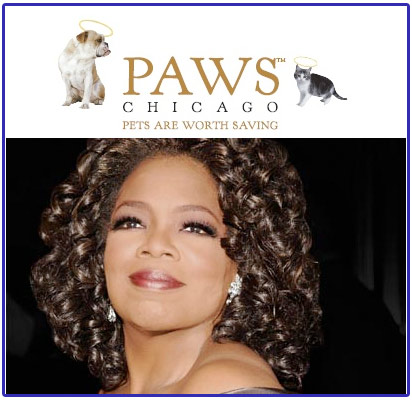 oprah, paws, pets are worth saving, animal shelter, oprah winfrey show, cocker spaniel