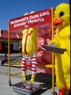 peta-chick-bleeds-ronald