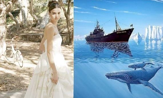 wedding_whales