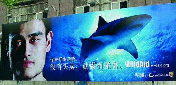yao ming, sharks, shark finning