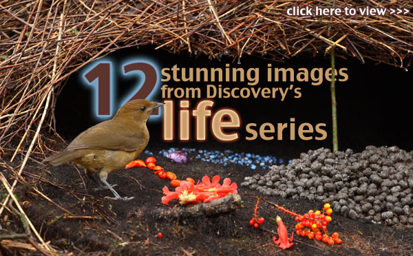 discovery channel life