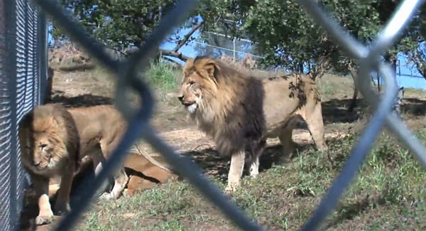 bob barker lions