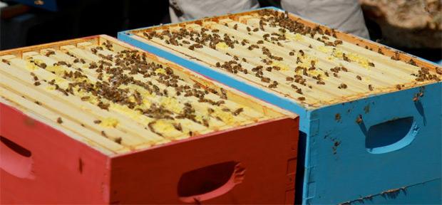 google-bees