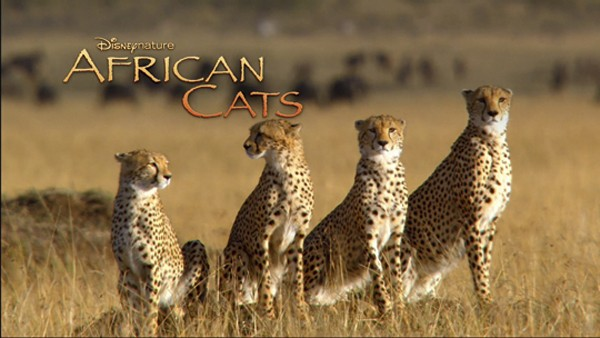 AfricanCats