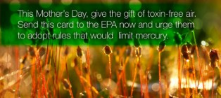 greenpeace mother's day campaign