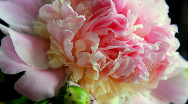 organic flower