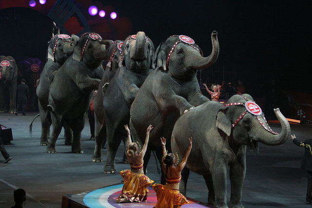 Back in March, Ringling Bros. announced they are retiring its remaining elephants by 2018, however, life after the circus doesn't seem too grand.