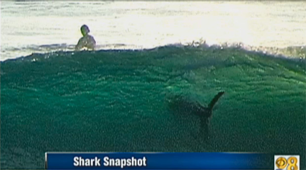 San Diego Great White Shark Spotted Hanging With Surfers