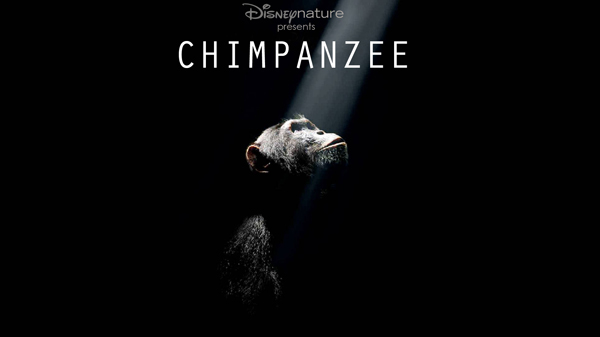 chimpanzee_disneynature_movie_image__1_