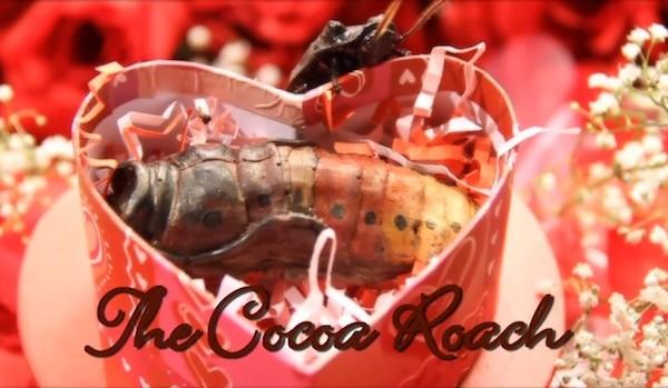 cocoa roach