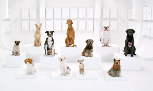 Dogs singing for Volkswagen's new super bowl commercial