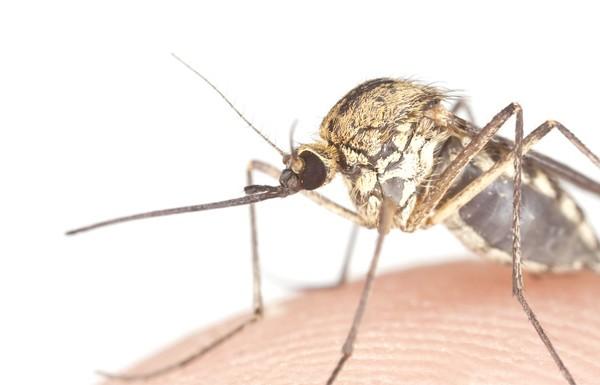 Mosquito causes malaria