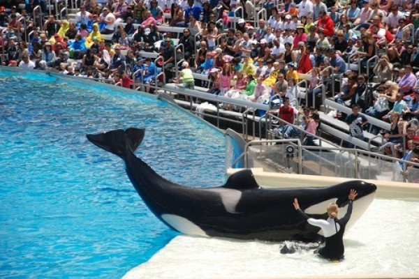 Judge dismisses PETA's SeaWorld slavery suit