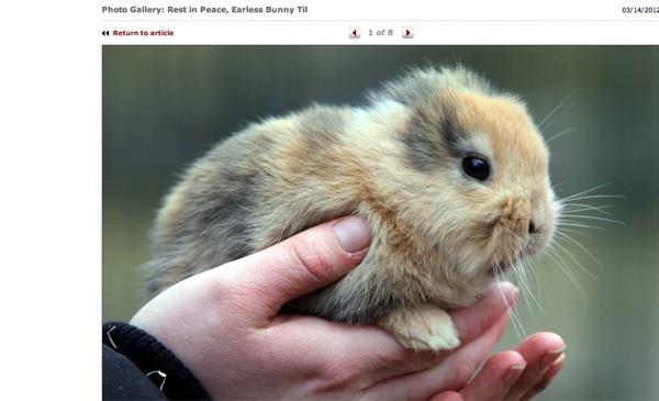 earless-bunny