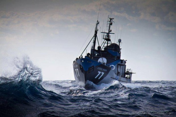 Sea Shepherd declares Operation Divine Wind a success as the whalers go home
