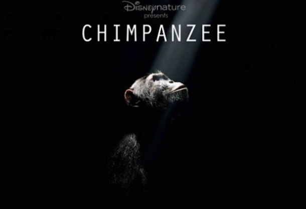 chimpanzee_disneynature_movie_image__1_-592x332