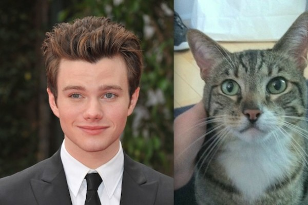chris colfer and cat