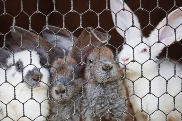 Eighty percent of the bunnies given as Easter pets are abandoned to shelters.
