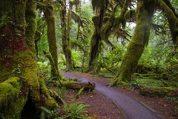Located in Olympic National Park, this unpaved rainforest is a prime spot for quiet.