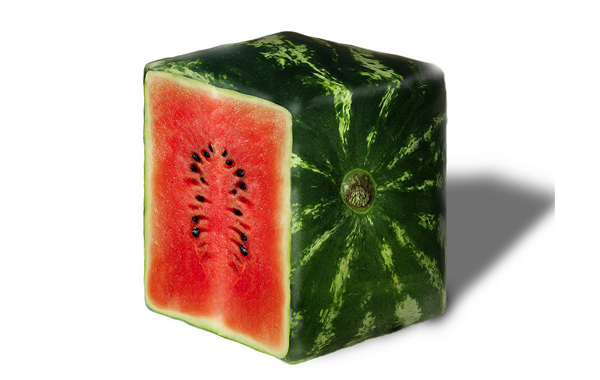 How to grow square watermelons