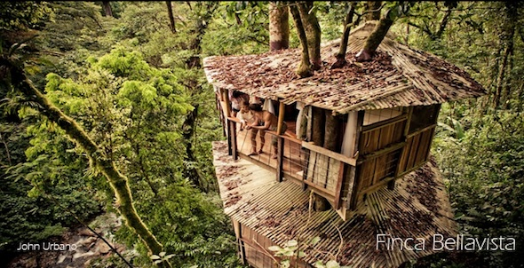 Finca Bellavista Treehouse Community