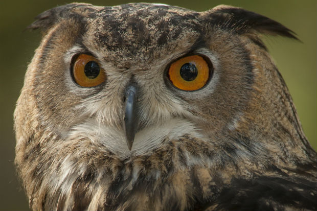 Harry Potter films and books cause hundreds of pet owls to be abandoned and released illegally into the wild
