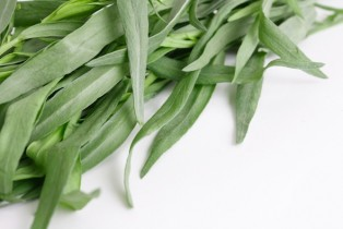 health benefits of tarragon