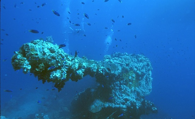 A barnacle-encrusted WWII gun at the bottom of the Truk Lagoon.