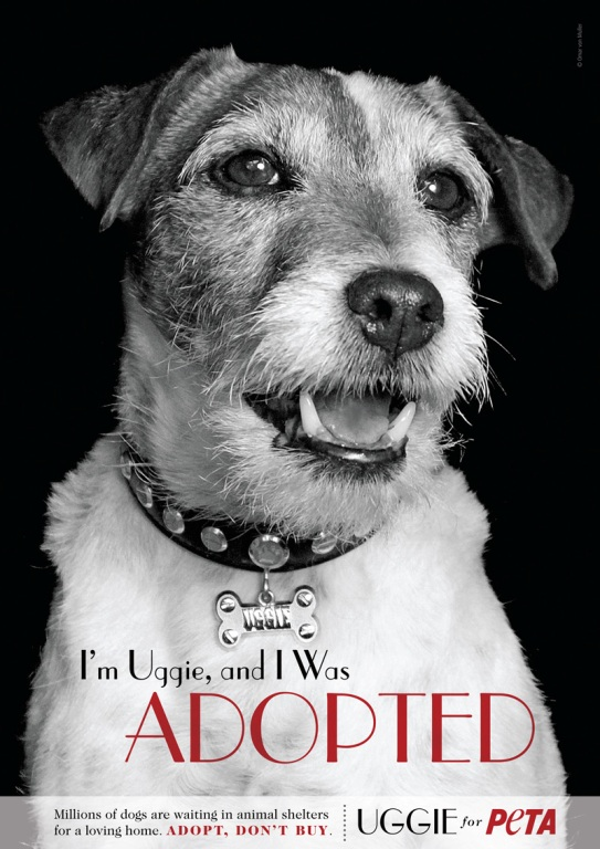 uggie adoption ad for peta