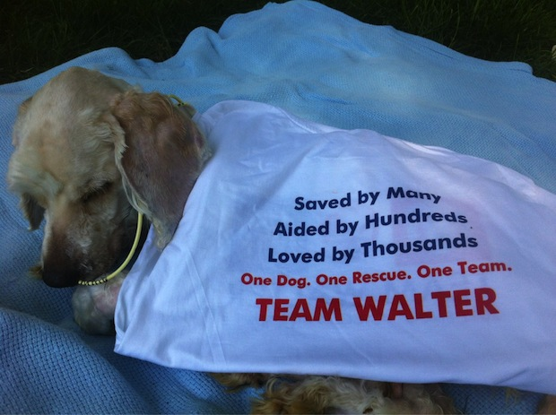 Walter, the abused dog whom Ashley Judd is trying to save.