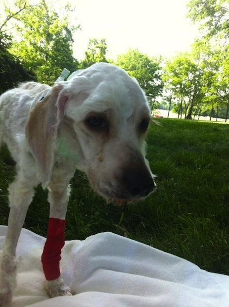 Walter, the abused dog that Ashley Judd is trying to save.