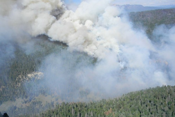 The Colorado wildfires become destructive and deadly for animals and pets