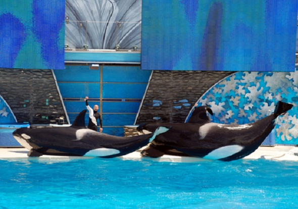 'Near Death at SeaWorld' video showing orca Kasatka's attack on trainer Ken Peters was released to the public