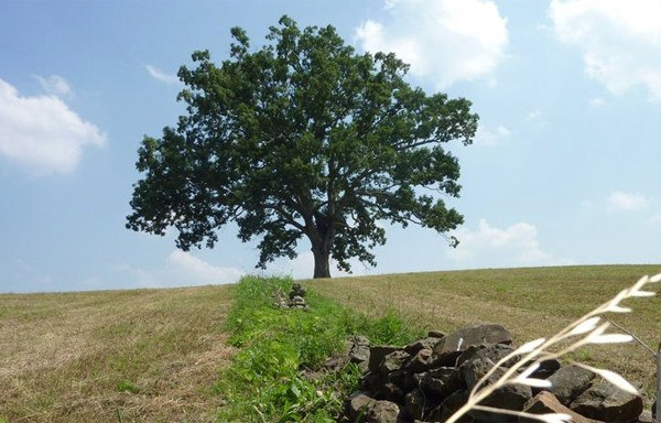 Shawshank Redemption Tree