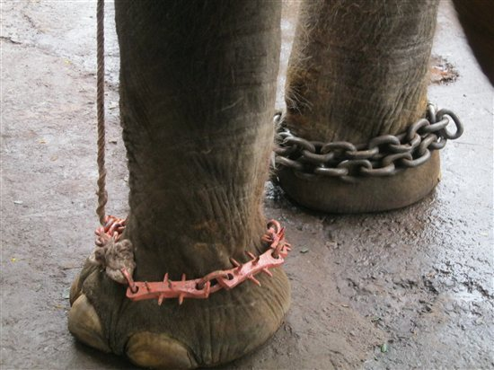 Part of Sunder's abuse includes being forced to wear spiked ankle chains.