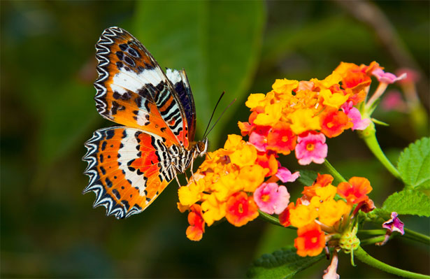 Shift in Butterfly Populations due to climate change