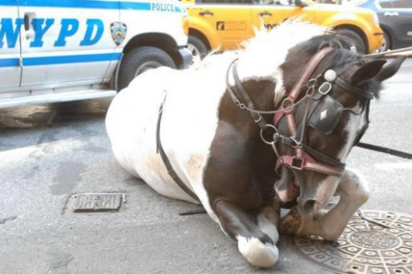 A frightened NYC carriage horse runs away after colliding with a car