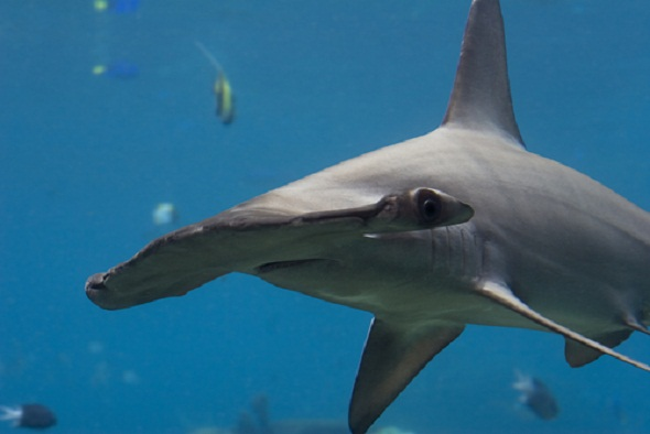 Shark attack survivors joined researchers to uncover shark fin soup made from fins of endangered sharks