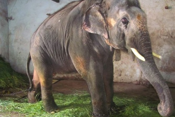 Thanks to McCartney's pleas, Sunder the elephant is being moved to a wildlife sanctuary.
