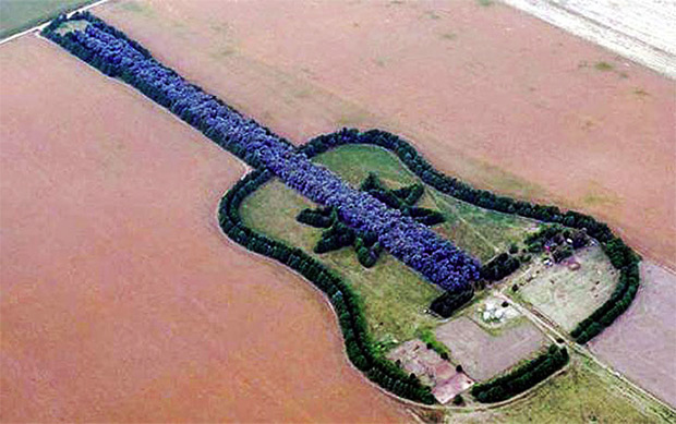 guitar tree memorial in argentina