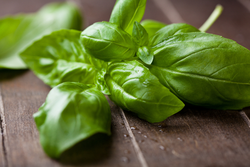 how to make basil tea