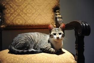 george w bush cat