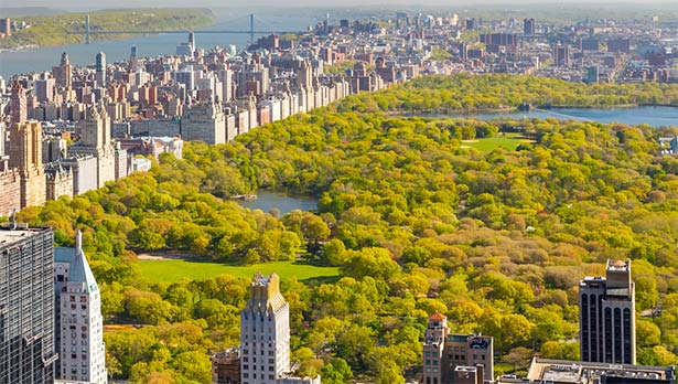 New York is planting its one millionth tree in Joyce Kilmer Park in the South Bronx as part of an eight-year plan to fight climate change.