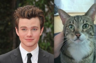 chris colfer and brian the cat