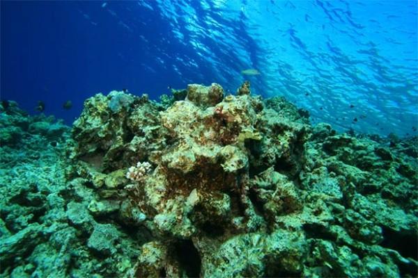 dead-coral